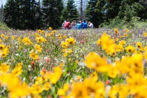 champs-fleur-nature-groupe