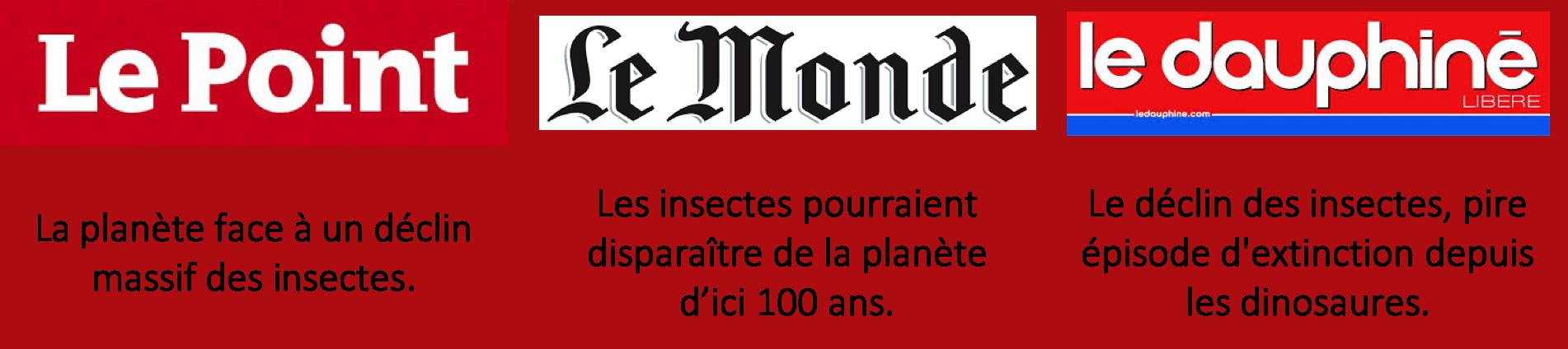 Le déclin des insectes