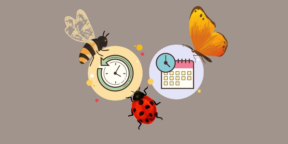 Les insectes et le temps