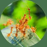 animation ecole insecte