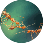 animation-fourmis-enfants-atelier