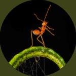 animation-fourmis-pédagogique
