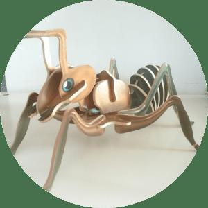 animation-insecte-anatomie