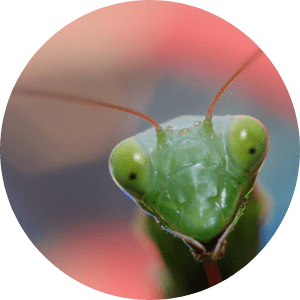 animation-insecte-curiosite