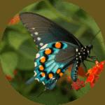 animation-insecte-ecole-bordeaux