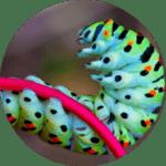 animation-papillon-ecole