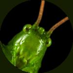 atelier-insecte-ludique