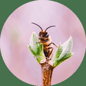 atelier-pollinisation-abeilles-insectes