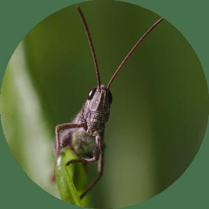 insecte-decouverte-enfant-ecole