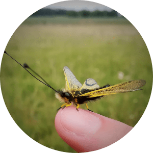 insecte-observation