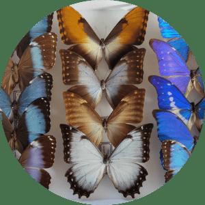 insectes-collection-animation-pédagogique