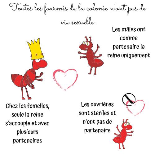 saint-valentin-fourmis-sexe-insectes