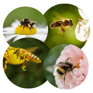 Les rôles des insectes dans la nature #1 La pollinisation