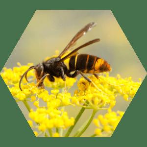 animation-ehpad-insectes-envahissant-fourmidables