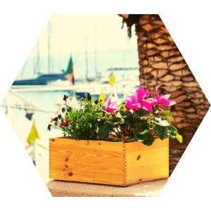 atelier-ehpad-fleurs-melliferes-insectes-fourmidables