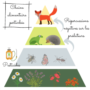 roles-insectes-chaine-alimentaire-exemple-perturbe