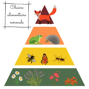 roles-insectes-chaine-alimentaire-exemple-renard
