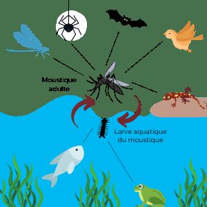 Les rôles des insectes dans la nature #3 La chaine alimentaire