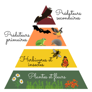roles-insectes-chaine-alimentaire-principe
