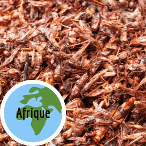manger-insectes-comestibles-afrique-sauterelles