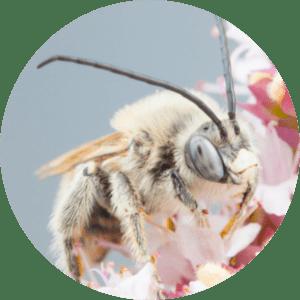 animation-abeilles-diversite