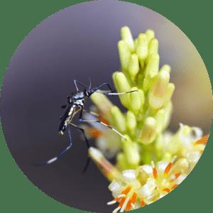 animation-moustique